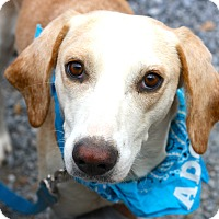 Adopt A Pet :: Danny - West Grove, PA
