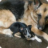 Adopt A Pet :: GEORGIE - Nampa, ID