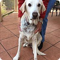 Adopt A Pet :: Texas Sam - Brattleboro, VT