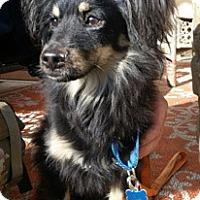 Adopt A Pet :: Jake - Canterbury, CT