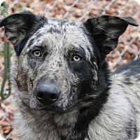 Adopt A Pet :: Waylon - Hagerstown, MD