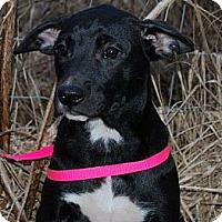 Adopt A Pet :: Jill - Harrisburgh, PA