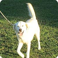 Adopt A Pet :: Lincoln - Salem, NH