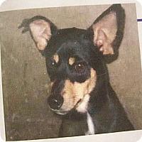 Adopt A Pet :: Harry - Las Vegas, NV