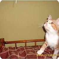 Adopt A Pet :: Cedric - Simpsonville, SC