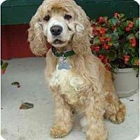 Adopt A Pet :: Baxter - Sugarland, TX