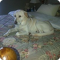 Adopt A Pet :: Ozzie - Forever Home Found!! - Huntsville, ON