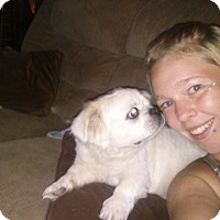 Adopt A Pet :: Ava (N. Tazewell, VA) - Vansant, VA