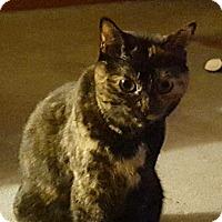 Adopt A Pet :: Gizmo - Cleveland, OH