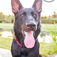 Adopt A Pet :: Mystic - Ormond Beach, FL