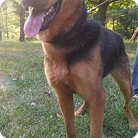 Adopt A Pet :: Jade - Louisville, KY