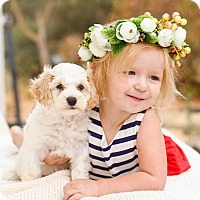 Adopt A Pet :: Cupcake - Loomis, CA