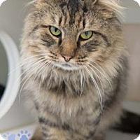 Adopt A Pet :: Ryan - Merrifield, VA