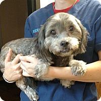 Adopt A Pet :: Chancey - Oviedo, FL