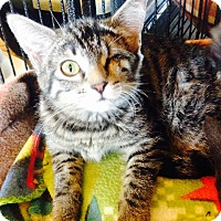 Adopt A Pet :: Lola - Encinitas, CA
