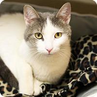 Adopt A Pet :: Smokie - Kettering, OH