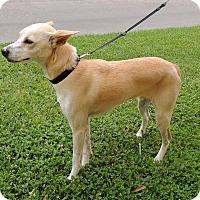 Adopt A Pet :: Aspen - Humble, TX
