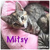 Adopt A Pet :: Mitsy - Arlington/Ft Worth, TX