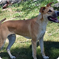 Great Dane Mix Dog for adoption in Mountain Center, California - General