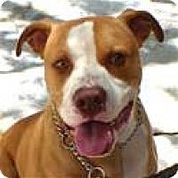 Adopt A Pet :: JOHNNY (ECAS Kennel A1) - Pleasanton, CA
