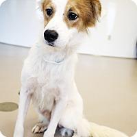 Adopt A Pet :: Sammy - Appleton, WI