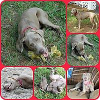 Adopt A Pet :: ARI - Davenport, FL