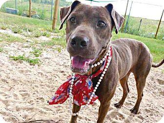 Greyhound Mix Dog for adoption in Tavares, Florida - TROPICANA