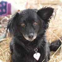 Adopt A Pet :: Dodger - Vacaville, CA