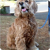 Adopt A Pet :: Liberty - Tacoma, WA