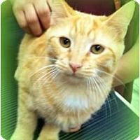 Adopt A Pet :: Odin - Orlando, FL