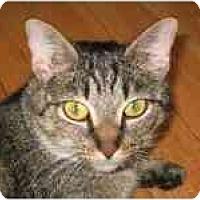 Adopt A Pet :: Stella - Arlington, VA