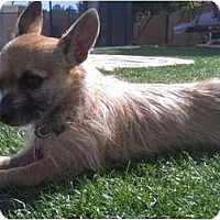 Adopt A Pet :: Cricket - Phoenix, AZ