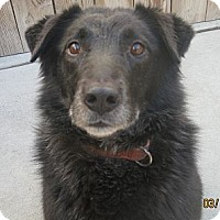 Adopt A Pet :: Black Jack (ADOPTED!) - Chicago, IL