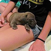 Adopt A Pet :: Joshua - Roaring Spring, PA