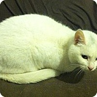 Adopt A Pet :: Snowball & Snowflake - Temple, PA