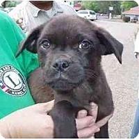 Adopt A Pet :: Max - Braintree, MA