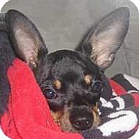 Adopt A Pet :: TJ - McDonough, GA