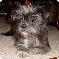 Adopt A Pet :: Melissa - Mooy, AL