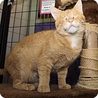 Adopt A Pet :: Buttercup - Cincinnati, OH