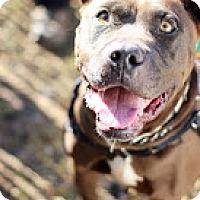 Adopt A Pet :: Remy - Tinton Falls, NJ