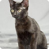 Adopt A Pet :: Marie - Edmond, OK