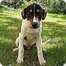 Adopt A Pet :: Blane (POM-EC)