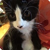 Adopt A Pet :: Ivan - Colmar, PA