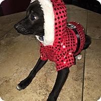 Adopt A Pet :: Jacob - Ogden, UT