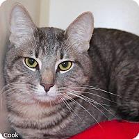 Adopt A Pet :: Fezzik - Ann Arbor, MI