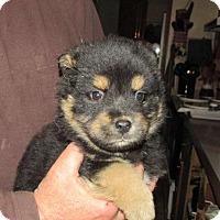 Adopt A Pet :: Kathan - Rocky Mount, NC