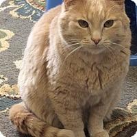 Adopt A Pet :: Archie - Buffalo, WY