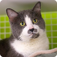 Adopt A Pet :: Beatrice - Troy, MI
