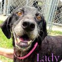 Adopt A Pet :: Lady - Georgetown, SC