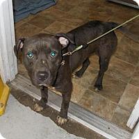Adopt A Pet :: Bill - Lewisburg, TN